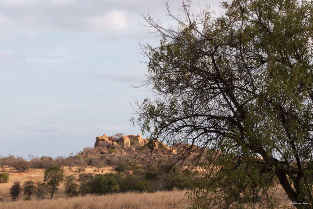 colline dans la game farm Boekenhoutbul en afrique du sud