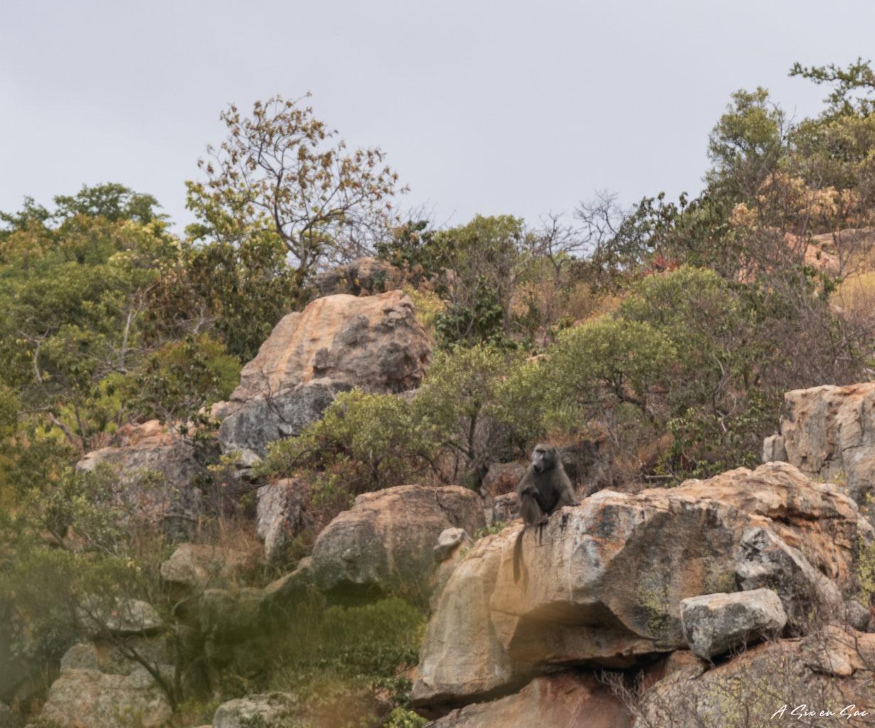 la province du Mpumalanga aux portes du parc Kruger ( et son emblématique Blyde River Canyon )