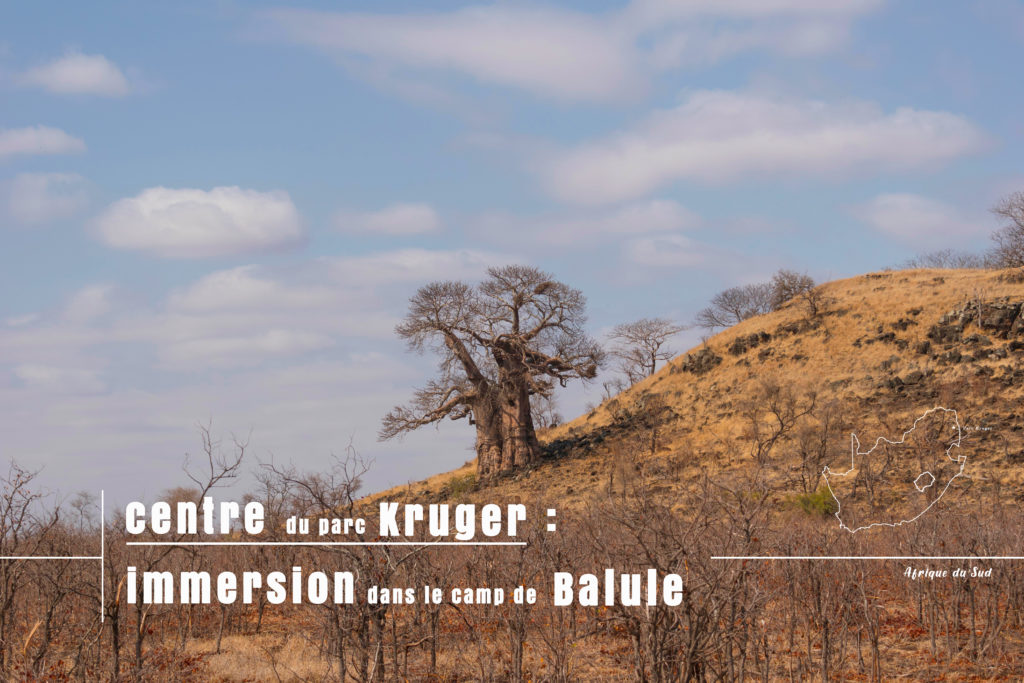 baobab au centre du aprc kruger pendant notre safari en autonome