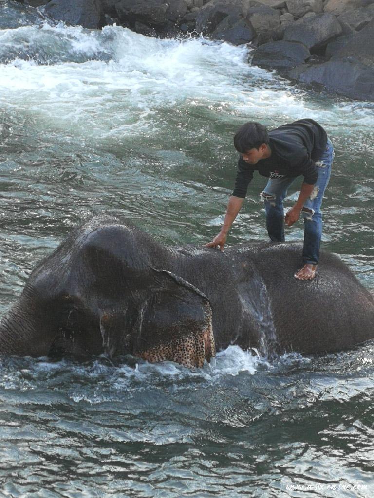 bain des éléphants à Tadlo 1