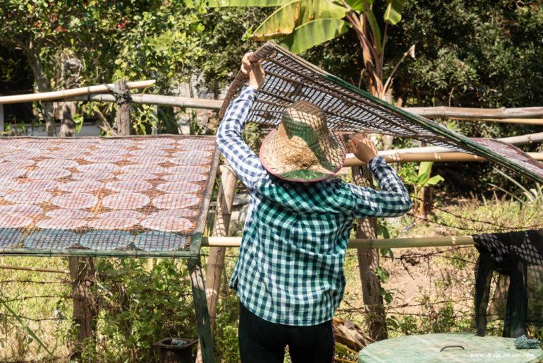 Femme retournant des séchoirs à feuilles de riz à Battambang-Cambodge