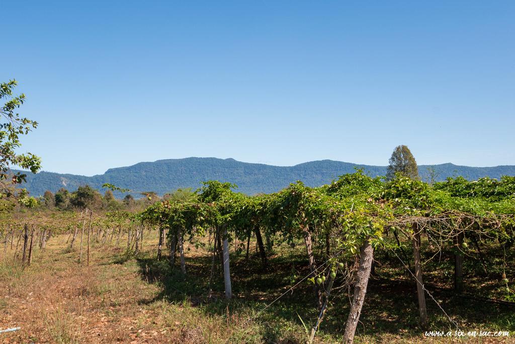 vue sur le plateau des Bolovens au Laos et la vigne de la happy farm