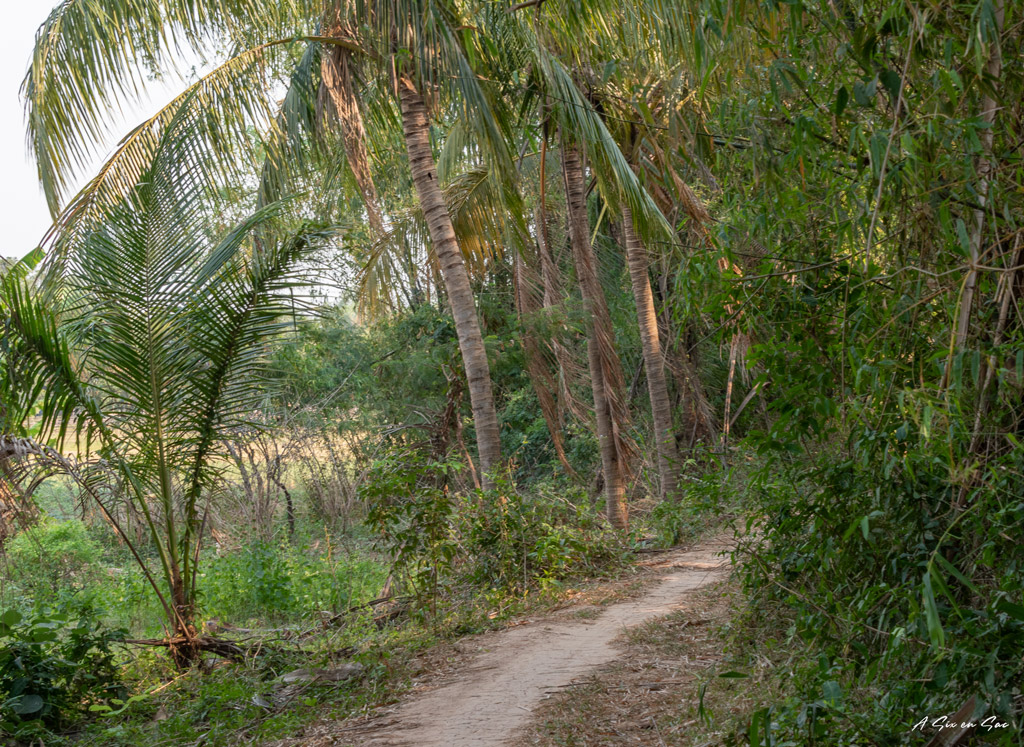 chemin sur l'île de Kaoh Trong - Cambodge Kratie dauphins d'Irrawaddy