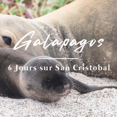 otarie et son petit sur Galapagos San cristobal Equateur Novembre 2020