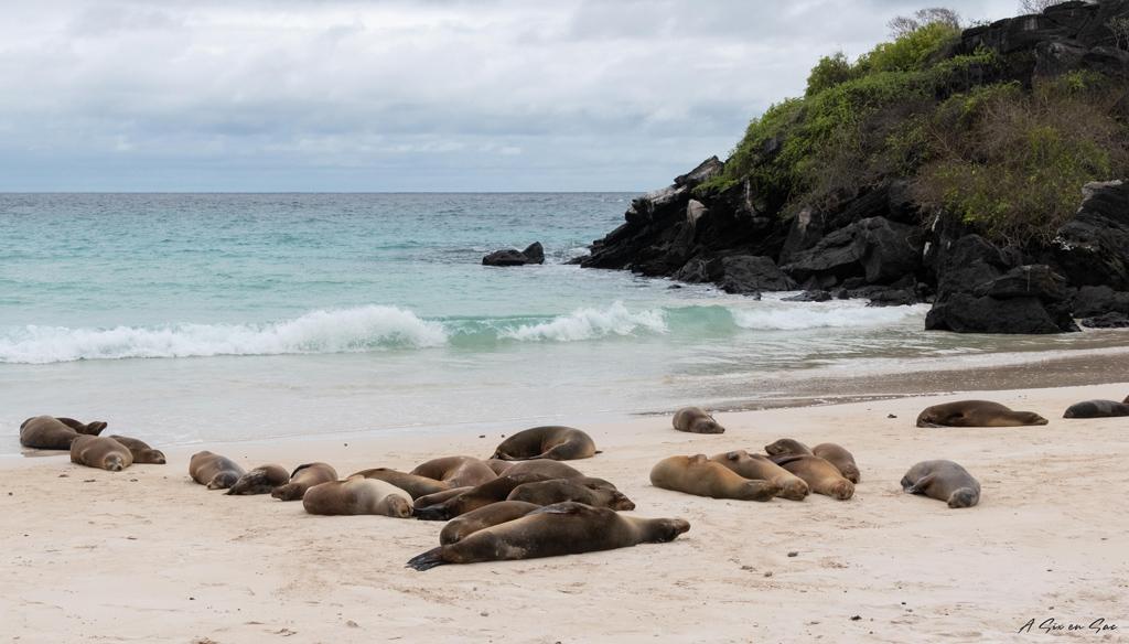 plage de Puerto Chino et ses otaries-Galapagos San cristobal Equateur novembre 2020