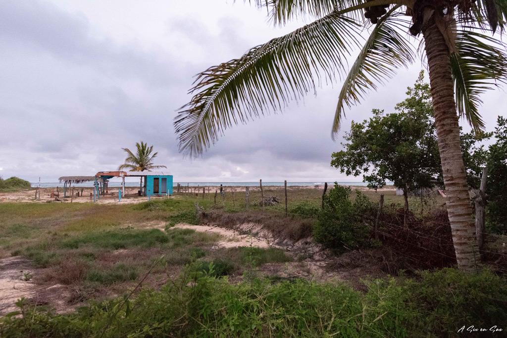 vue depuis l' hôtel la Jungla sur Galapagos Isla Isabela en novembre 2020