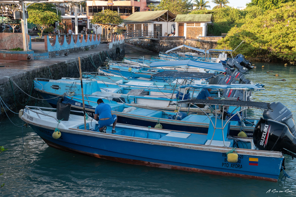 bateaux du port de pêche de Puerto Ayora-Santa Cruz-Galapagos novembre2020