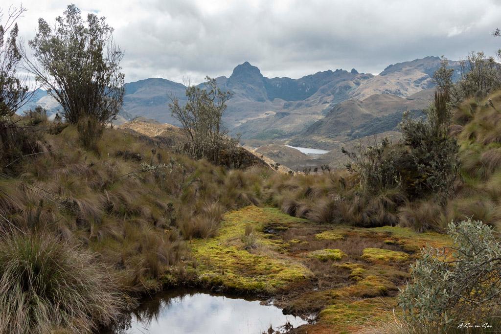 Lagunes et végétations du parc Cajas dans les environs de Cuenca Equateur ( comme pour Ingapirca )