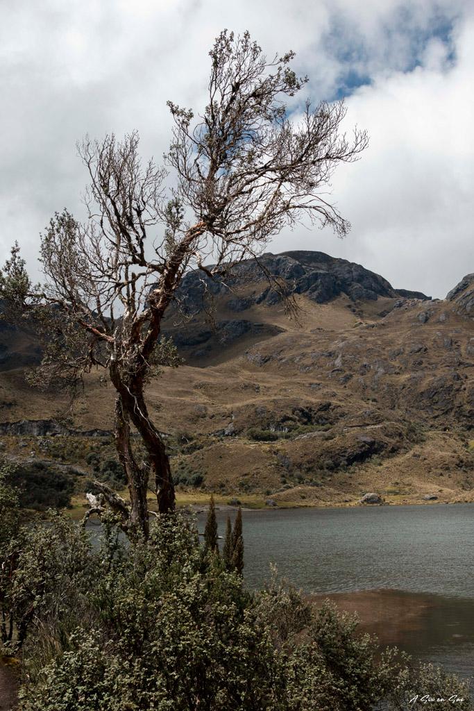 lagune du parc Cajas aux environs de Cuenca Equateur ( comme le site d' Ingapirca )