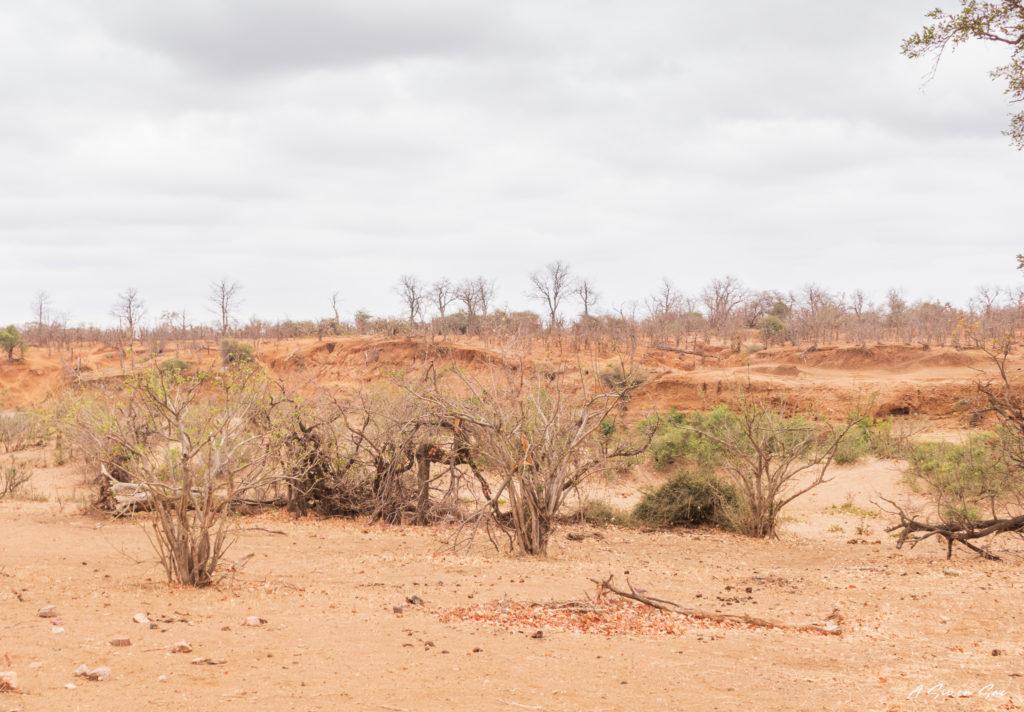 paysage désertique lors de notre safari en autonome dans le centre du parc national kruger en afrique du sud