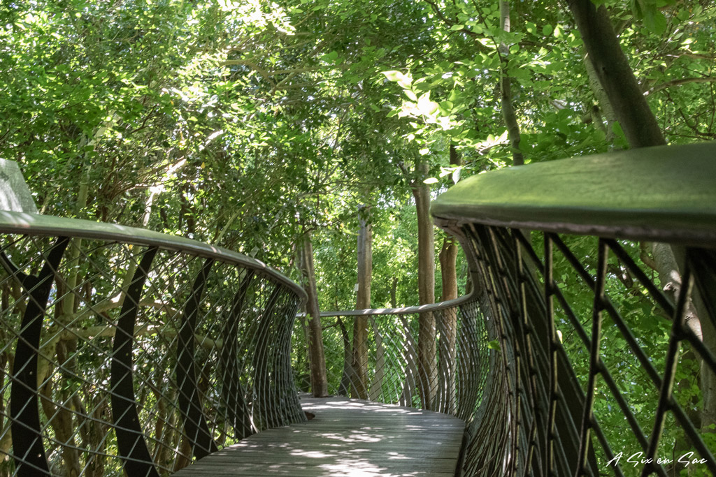 Pont suspendu dans le canopé du jardin de Kirstenboch-visiter Cape town AFS