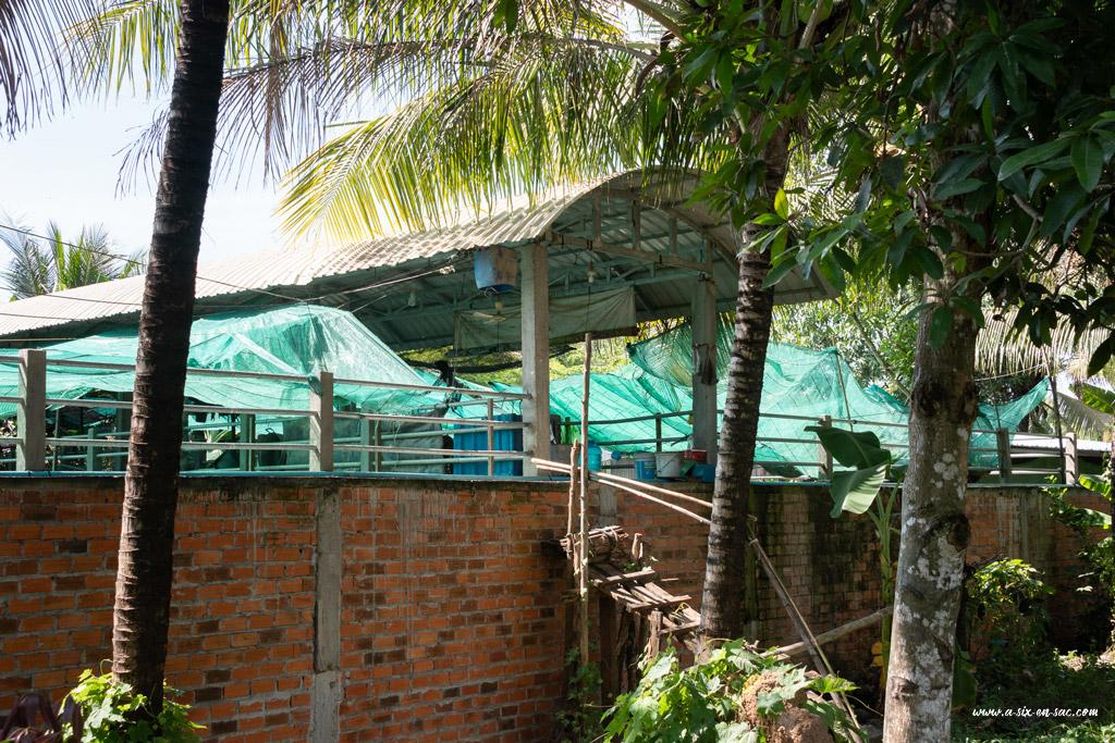 bassin sans protection d'une ferme de crocodiles à Battambang-Cambodge