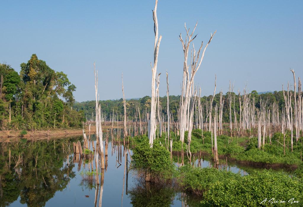 forêt inondée par le lac artificiel entre Thalang et Lak Sao-boucle de Thakhek-Laos