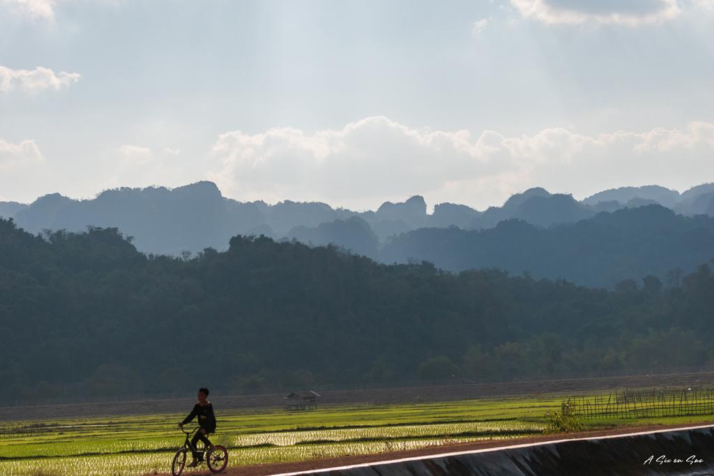 paysage de rizière en direction de Thalang-boucle de Thakhek-Laos