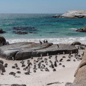 Boulder's Beach sur la péninsule du Cap - Bilan de nos 49 jours en Afrique du Sud TDM en famille