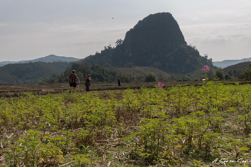 Dans les rizières avant d'arriver sur Ban Na