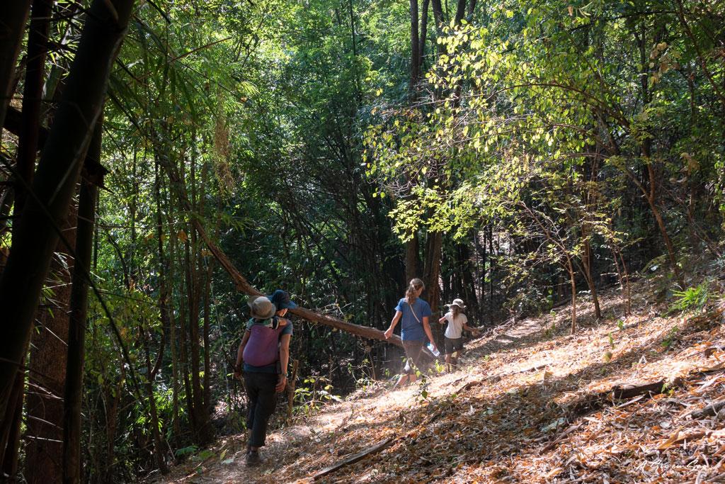 descente dans les bambous pour notre dernier jour de trek à Hsipaw au Myanmar