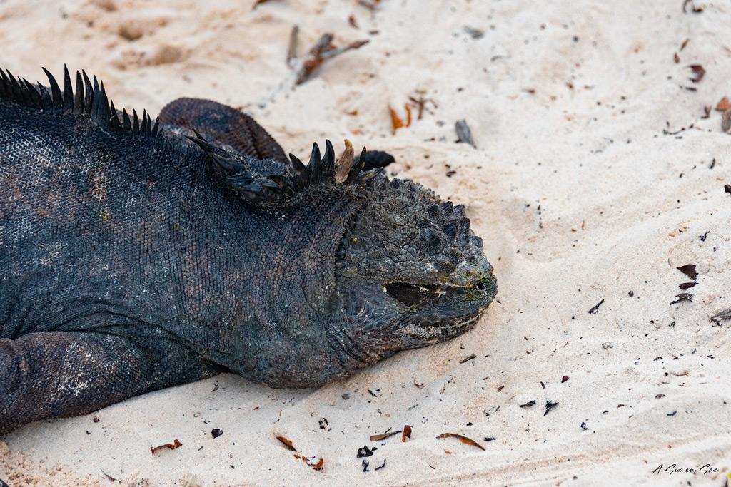 Tortuga bay isla santa cruz galapagos novembre 2020