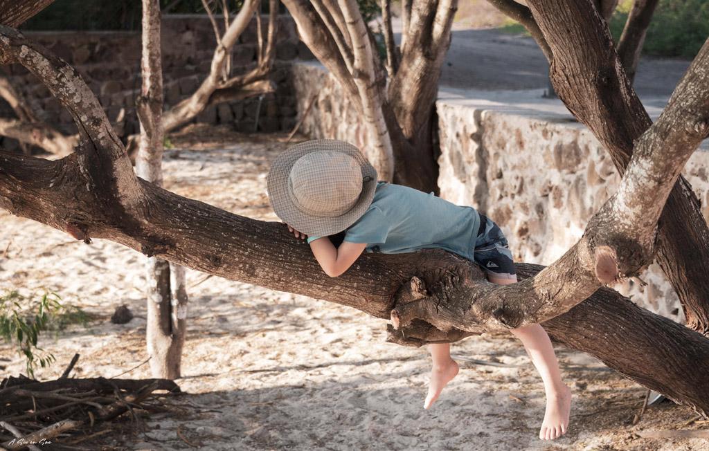 Nils somnolant sur un cocotier à Playa Mann Galapagos San cristobal Equateur novembre 2020