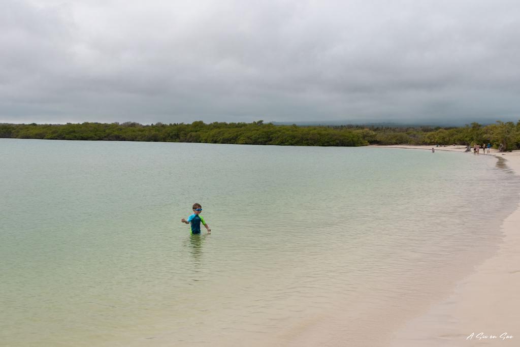 Nils se baigne à la Playa Mansa sur Santa Cruz aux Galapagos Novembre 2020