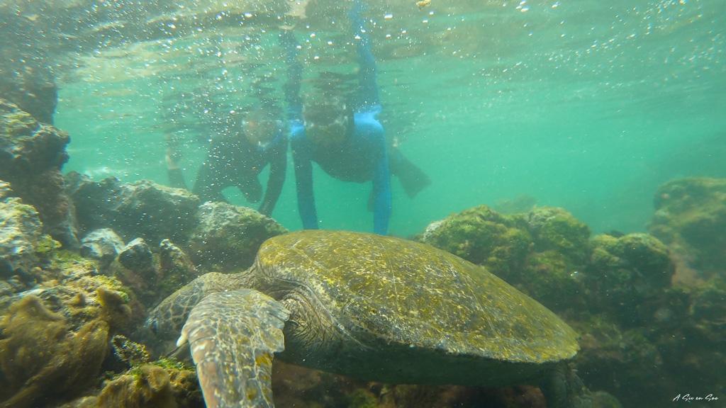 les garçons en snorkeling face à une tortue marine sur Isla Isabela aux Galapagos en novembre 2020