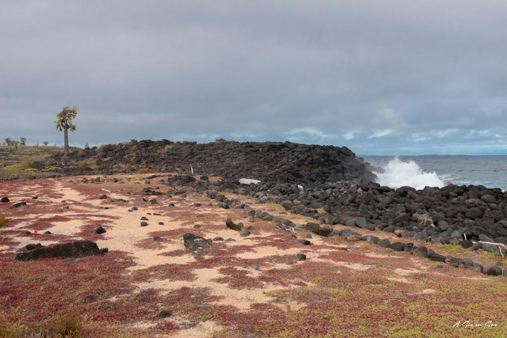 Plage de Los Perros - péninsule en face de Puerta Ayora- santa cruz-galapagos-novembre 2020
