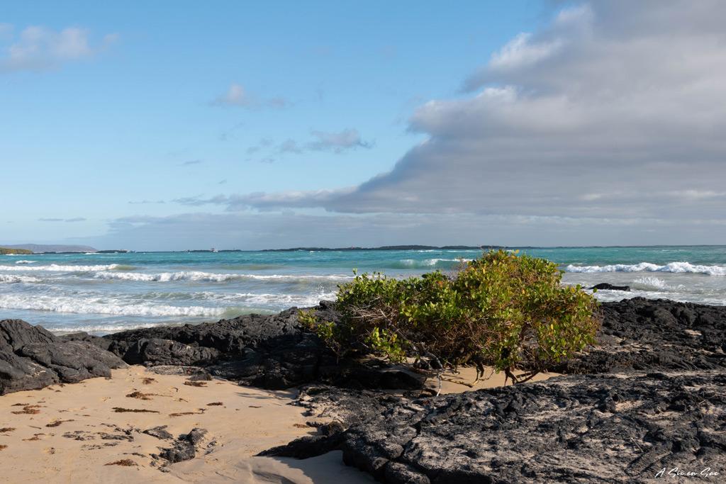 plage en face de l'hostal la jungla - isla isabela - galapagos - novembre 2020