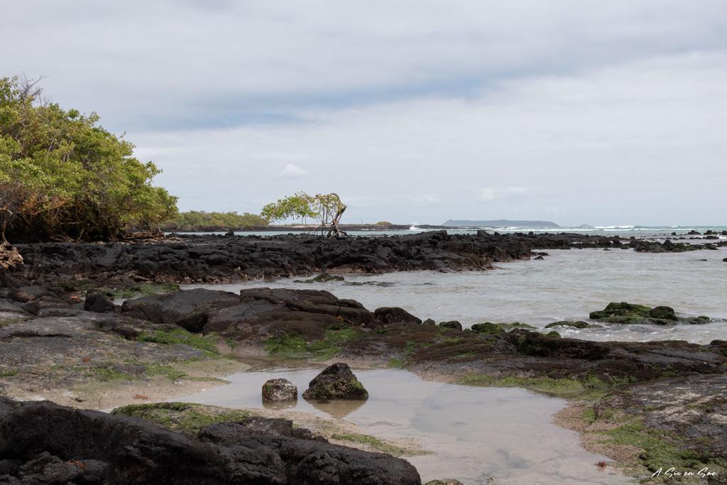 vue de la playa del amor sur le chemin du mur des larmes - isla isabela - galapagos - novembre 2020